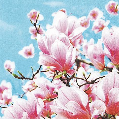 Servietten www,  Blumen - Magnolien,  Everyday,  lunchservietten,  Magnolien