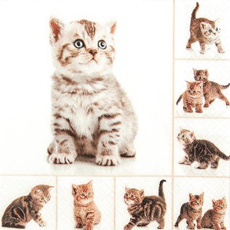 Everyday,  Tiere - Katzen,  Everyday,  lunchservietten,  Katzen
