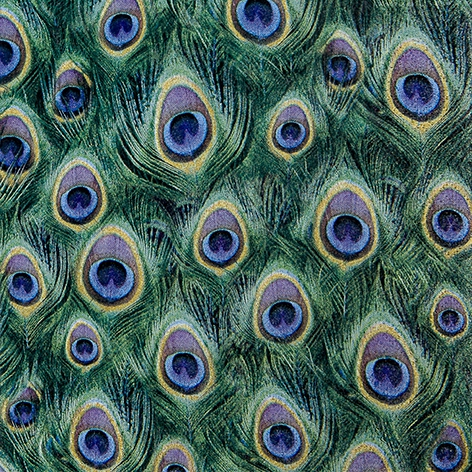 Lunch Servietten Peacock Feathers,  Tiere - Felle / Haut,  Everyday,  lunchservietten,  Federn,  Pfau