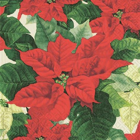 Lunch Servietten Euphorbia pulcherrima,  Blumen - Weihnachtsstern,  Weihnachten,  lunchservietten,  Weihnachtsstern