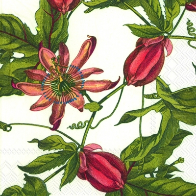 Servietten / Sonstige Blumen,  Blumen -  Sonstige,  Everyday,  cocktail servietten,  Blumen