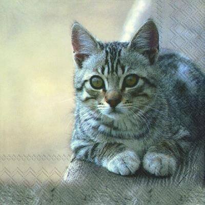 Lunch Servietten CUDDLY CAT,  Tiere - Katzen,  Everyday,  lunchservietten