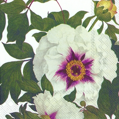 Servietten Blumenmotive,  Blumen - Rosen,  Everyday,  lunchservietten,  Rosen
