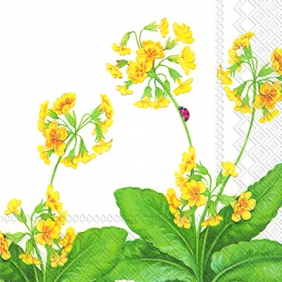 Servietten 25 x 25 cm,  Blumen - Primeln,  Everyday,  lunchservietten,  Primeln