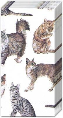 Taschentücher MY FAVORITE CAT,  Tiere,  Everyday,  bedruckte papiertaschentücher,  Katzen