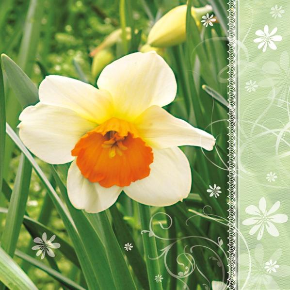 Lunch Servietten Narzisse ,  Blumen -  Sonstige,  Blumen - Osterglocken,  Blumen,  Frühjahr,  lunchservietten