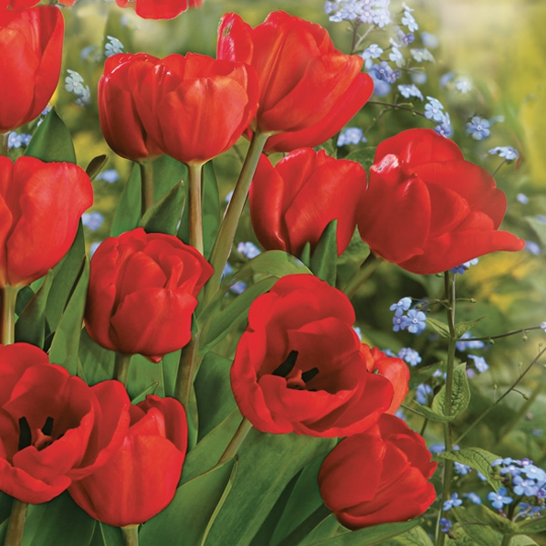 Lunch Servietten Tulpe,  Blumen - Tulpen,  Frühjahr,  lunchservietten,  Tulpen