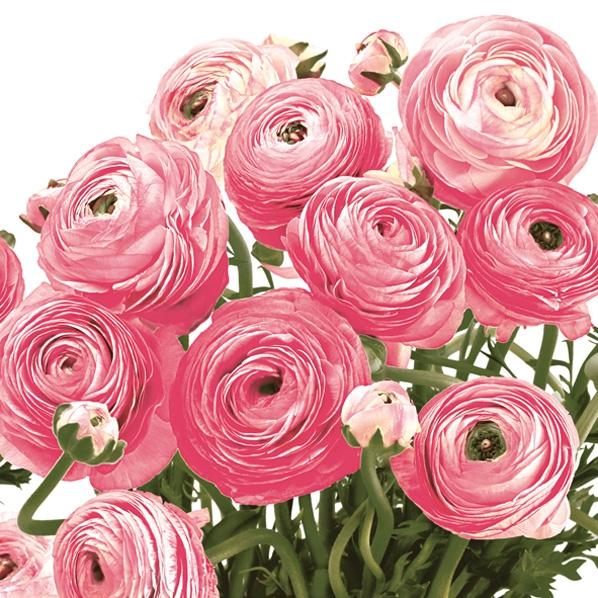 Lunch Servietten rosa Ranunkeln,  Blumen - Rosen,  Frühjahr,  lunchservietten,  Ranunkeln