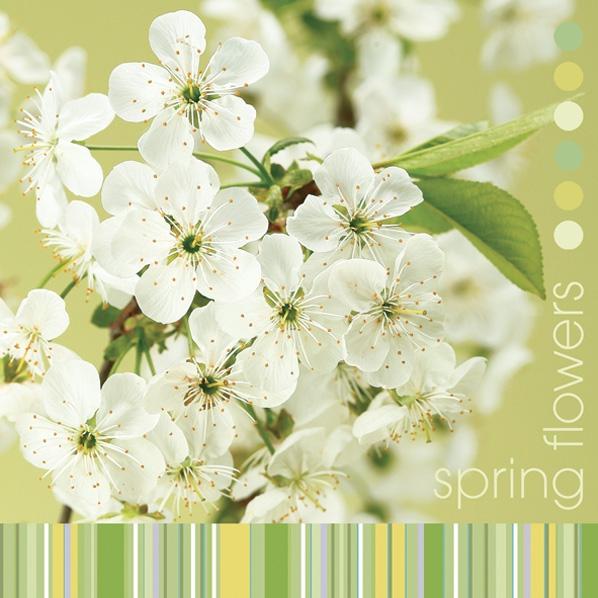 Daisy,  Blumen -  Sonstige,  Frühjahr,  lunchservietten,  Blüten