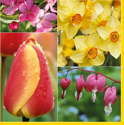 Lunch Servietten Garden flowers,  Blumen - Osterglocken,  Blumen - Tulpen,  Frühjahr,  lunchservietten