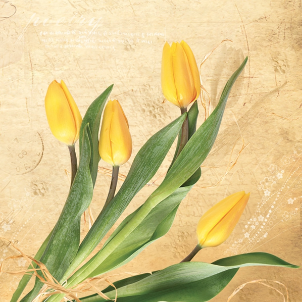 Maki POL-MAK Collektion,  Blumen - Tulpen,  Frühjahr,  lunchservietten,  Tulpen
