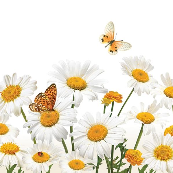Servietten Tiermotive,  Tiere - Schmetterlinge,  Blumen - Magariten,  Frühjahr,  lunchservietten,  Blumen,  Schmetterlinge