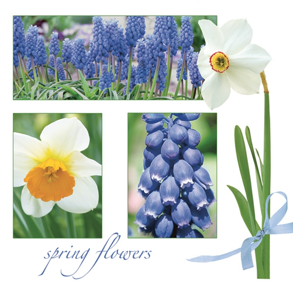 NEU im Shop,  Blumen - Osterglocken,  Blumen - Hyazinthen,  Frühjahr,  lunchservietten,  Hyazinthen,  Narzissen