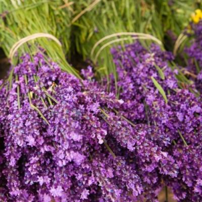 Servietten / Lavendel,  Blumen - Lavendel,  Everyday,  lunchservietten,  Lavendel