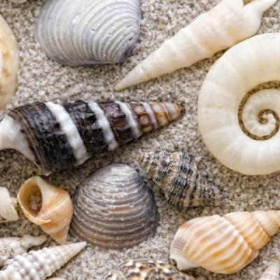 Servietten / Strand - Meer,  Regionen - Strand / Meer - Muscheln,  Everyday,  lunchservietten