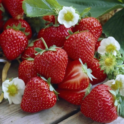 Nouveau Horeca,  Früchte - Erdbeeren,  Everyday,  lunchservietten