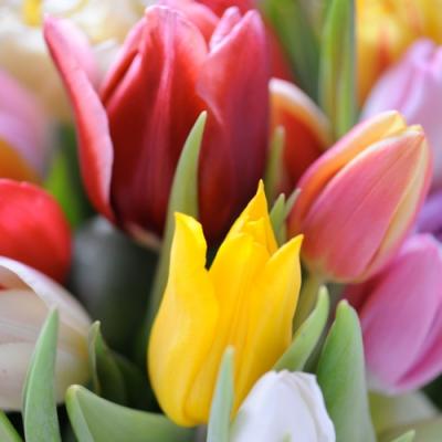 Nouveau Horeca,  Blumen - Tulpen,  Everyday,  lunchservietten,  Tulpen