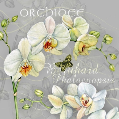 Lunch Servietten Orchidee,  Blumen - Orchideen,  Everyday,  lunchservietten,  Orchideen