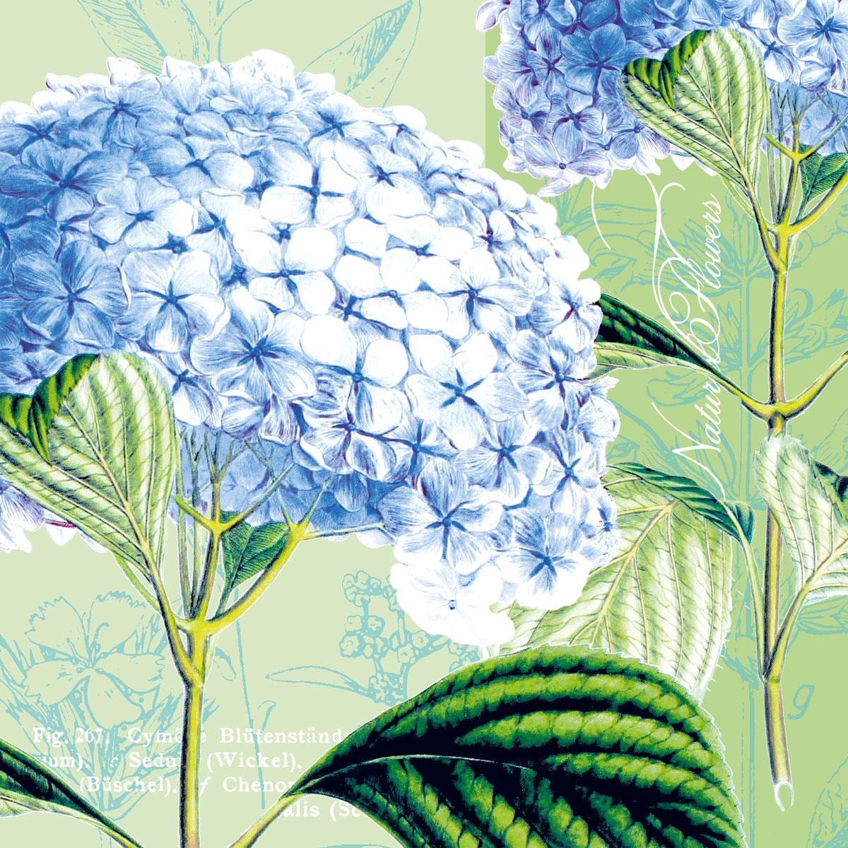 Lunch Servietten Hydrangea ,  Blumen -  Sonstige,  Everyday,  lunchservietten,  Hortensien