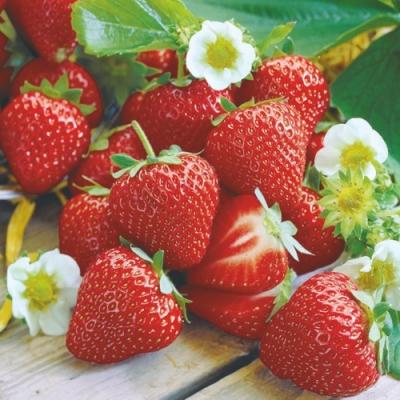 Cocktail Servietten Strawberry ,  Früchte - Erdbeeren,  Everyday,  cocktail servietten,  Erdbeeren