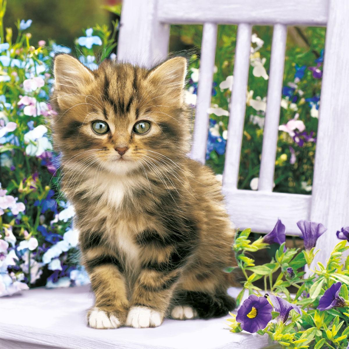 Lunch Servietten Kitty,  Blumen -  Sonstige,  Tiere - Katzen,  Everyday,  lunchservietten,  Katzen,  Blumen