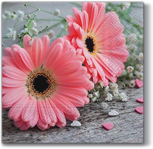 Lunch Servietten ,  Blumen -  Sonstige,  Everyday,  lunchservietten,  Gerbera