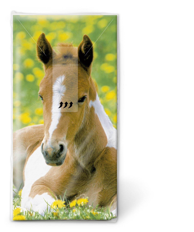 10 bedruckte Taschentücher Foal,  Regionen - Wald / Wiesen,  Everyday,  bedruckte papiertaschentücher,  Pferd