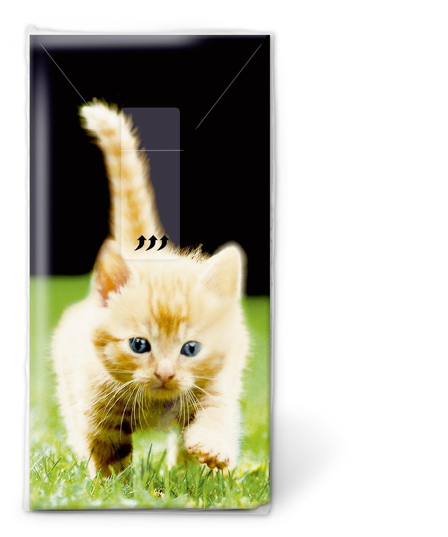 Taschentücher Forwards,  Tiere,  Everyday,  bedruckte papiertaschentücher,  Katzen