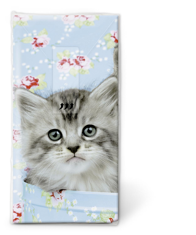 Taschentücher Gesamtübersicht,  Tiere,  Everyday,  bedruckte papiertaschentücher,  Katze