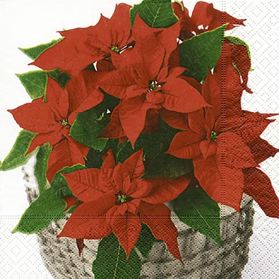 Lunch Servietten Poinsettia basket,  Weihnachten,  lunchservietten,  Weihnachtsstern
