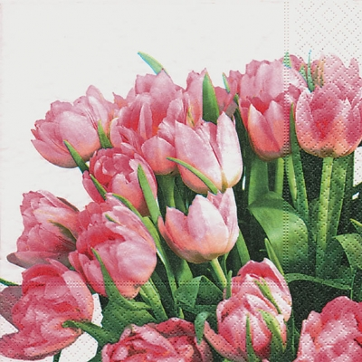 20 Servietten - 33 x 33 cm tulip time,  Blumen - Tulpen,  Everyday,  lunchservietten