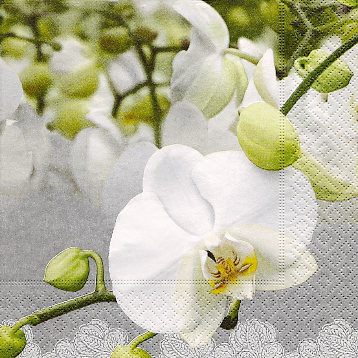 20 Servietten - 33 x 33 cm ,  Blumen - Orchideen,  Everyday,  lunchservietten