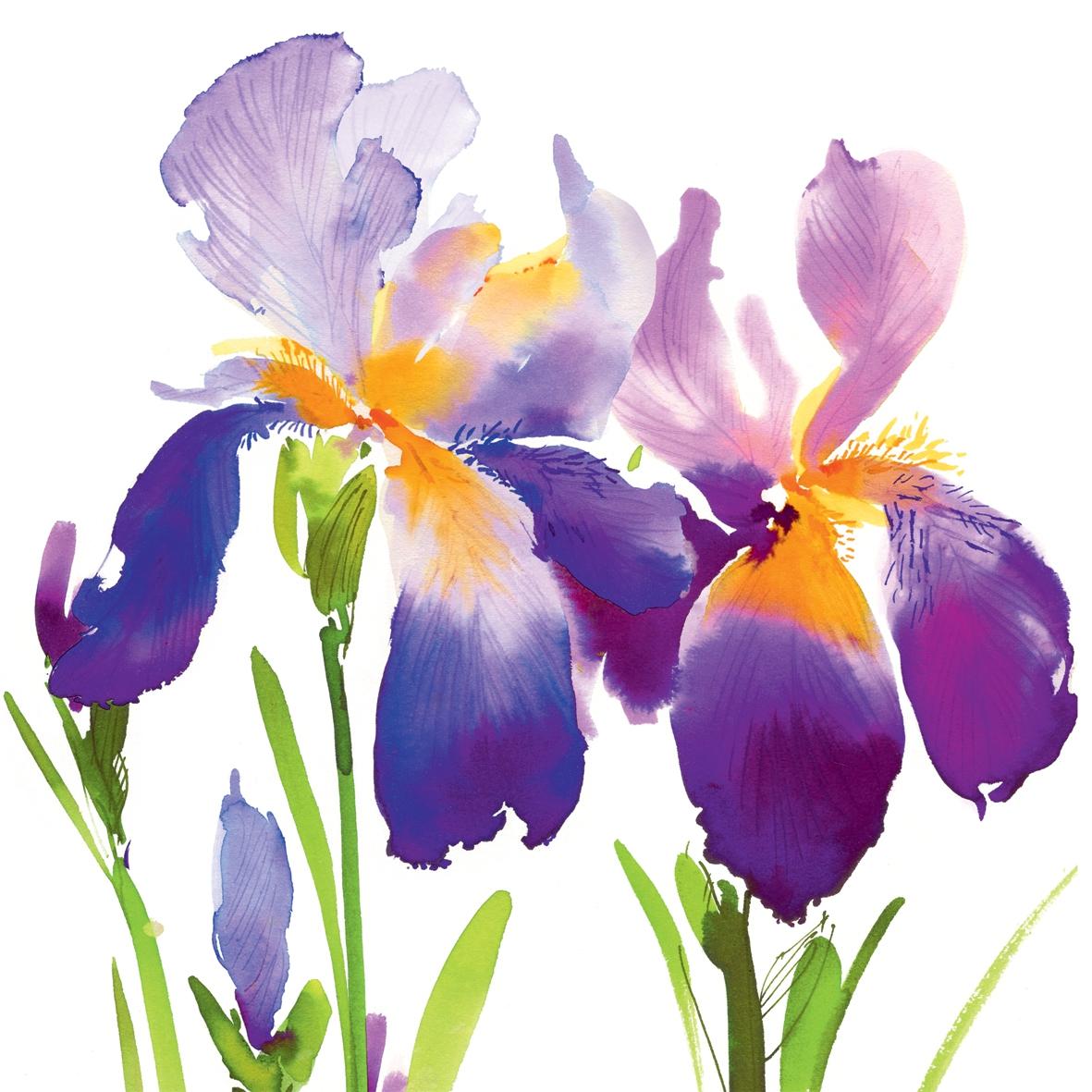 Cocktail napkins purple iris by wimmel napkins cocktail napkins purple iris izmirmasajfo