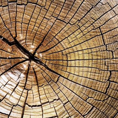 Paperproducts Design,  Pflanzen -  Sonstige,  Everyday,  lunchservietten,  Baumstämme,  Holz
