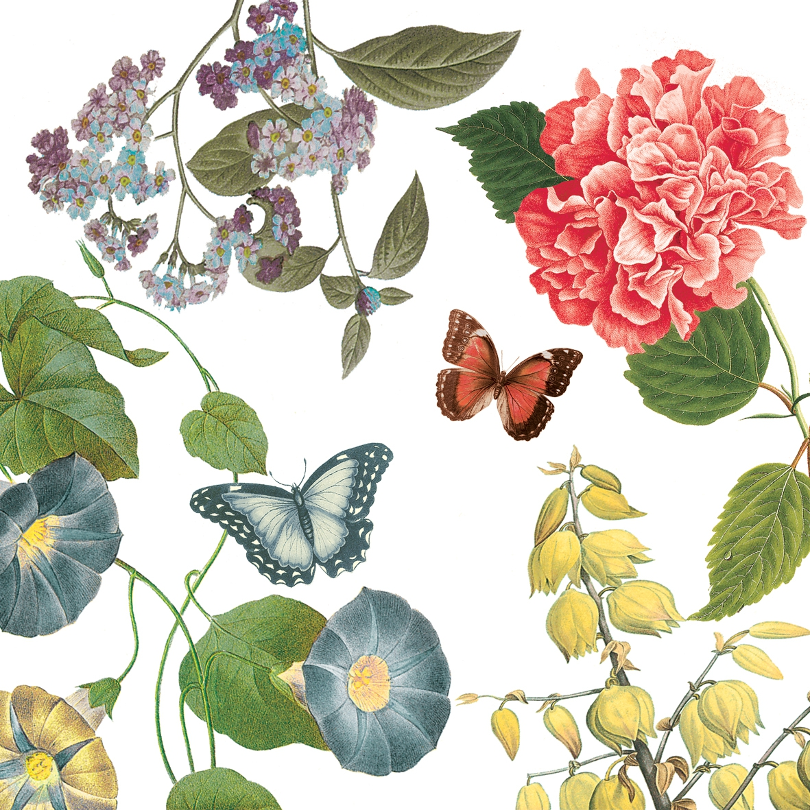 Lunch Servietten Victoria Garden,  Blumen -  Sonstige,  Pflanzen -  Sonstige,  Tiere - Schmetterlinge,  Everyday,  lunchservietten,  Blumen,  Schmetterlinge,  Pflanzen