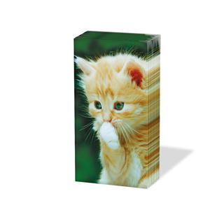 Taschentücher Little Kitty