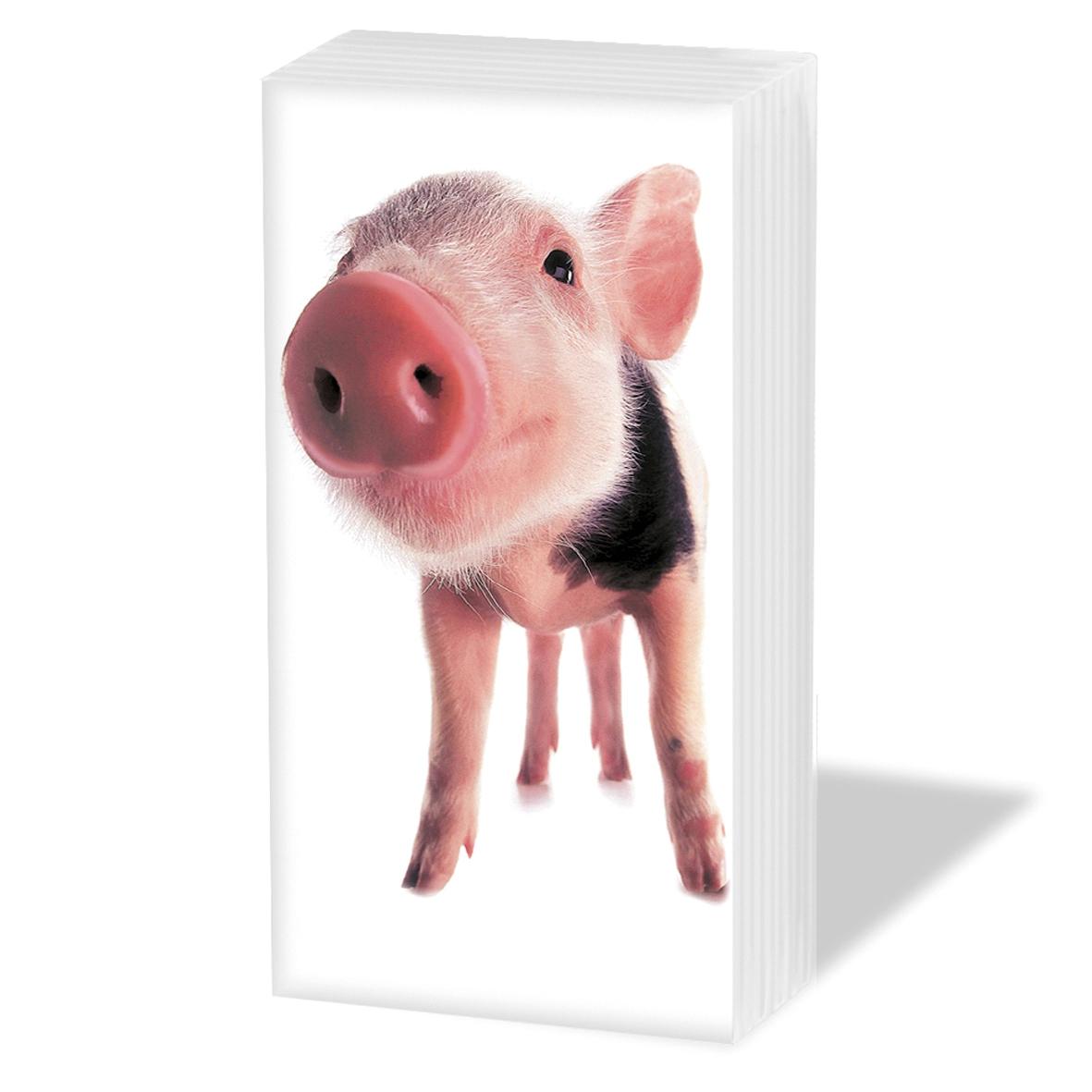 Taschentücher Sammy                              ,  Tiere,  Everyday,  bedruckte papiertaschentücher,  Schwein