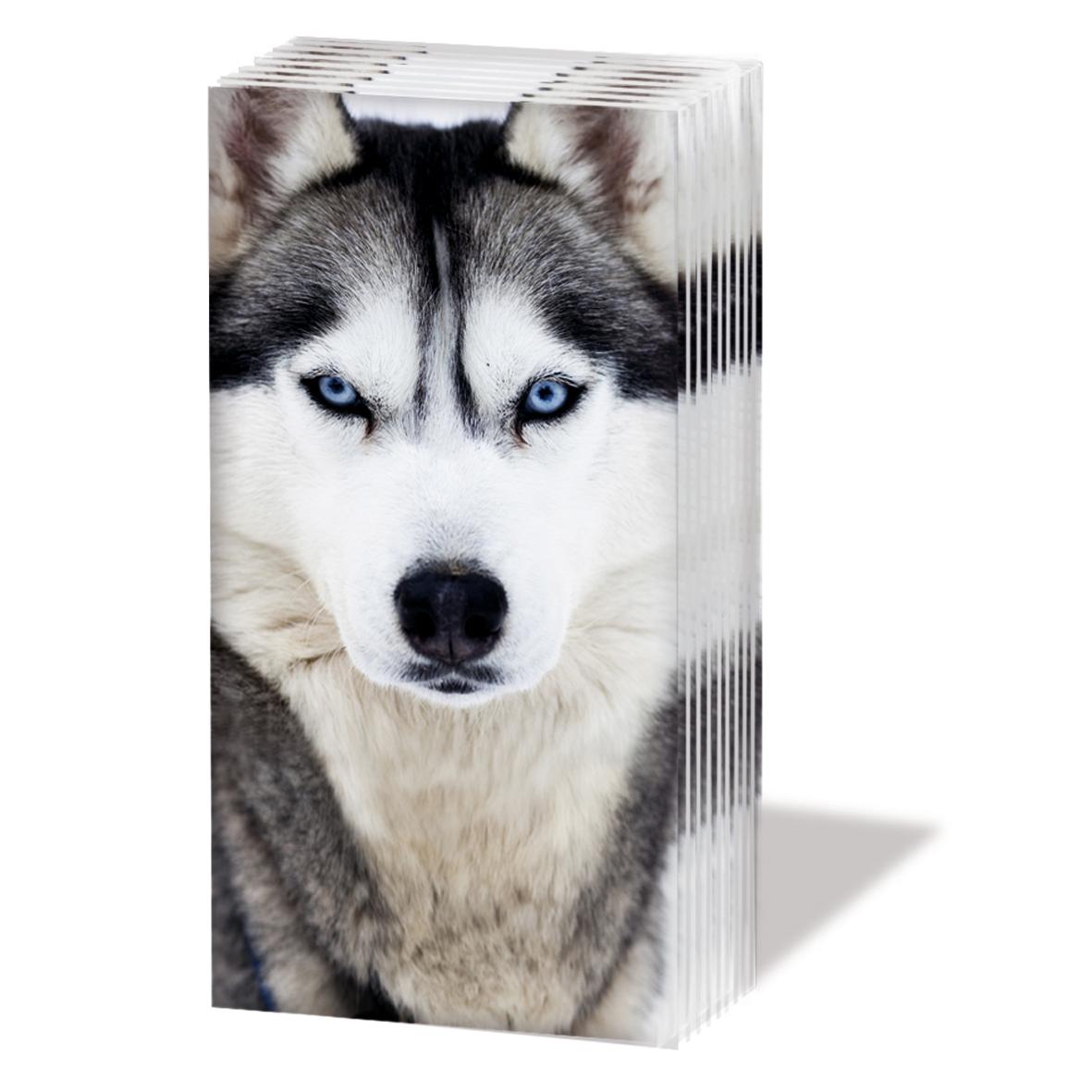 Taschentücher Husky,  Tiere,  Everyday,  bedruckte papiertaschentücher,  Hunde,  Husky