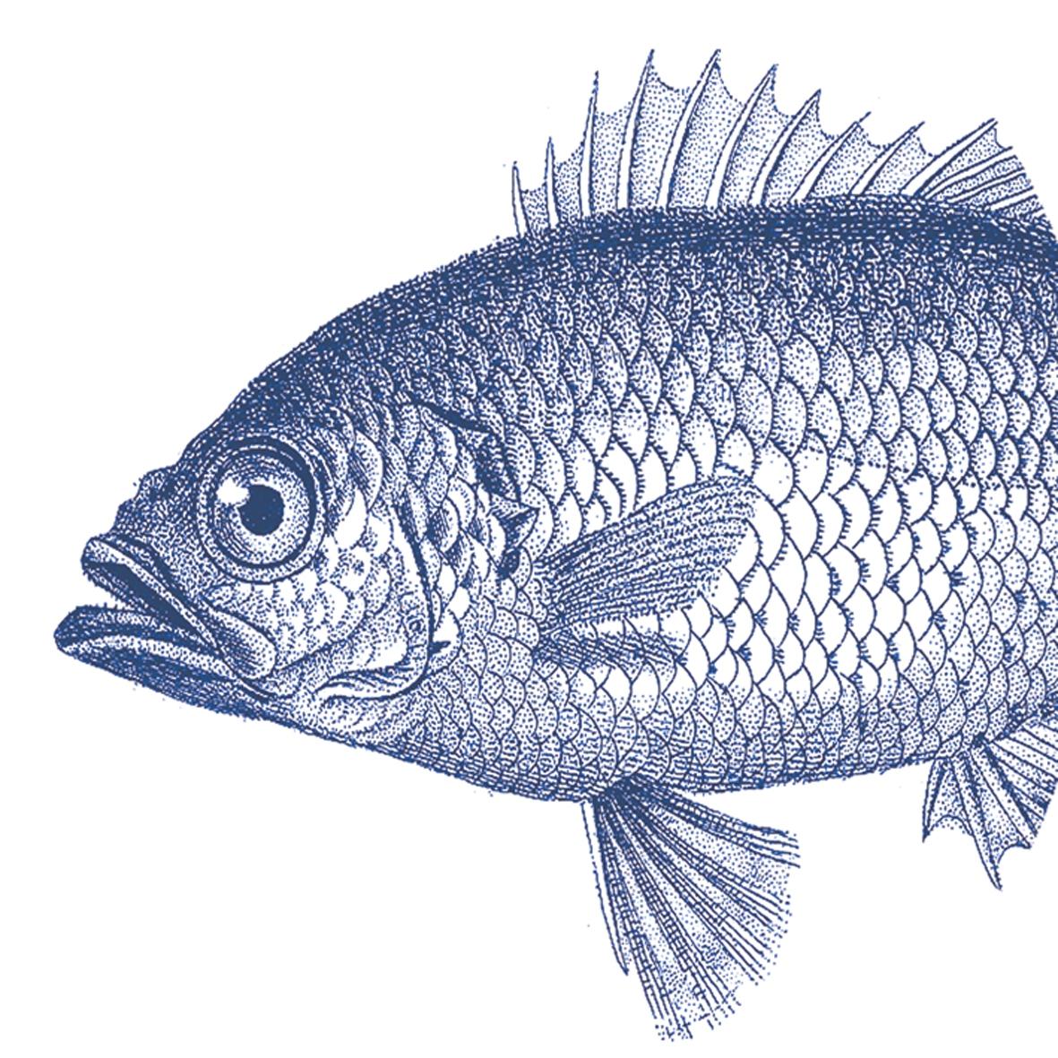 Lunch Servietten Fish marine,  Regionen - Strand / Meer -  Sonstige,  Tiere,  Regionen - Strand / Meer,  Everyday,  lunchservietten