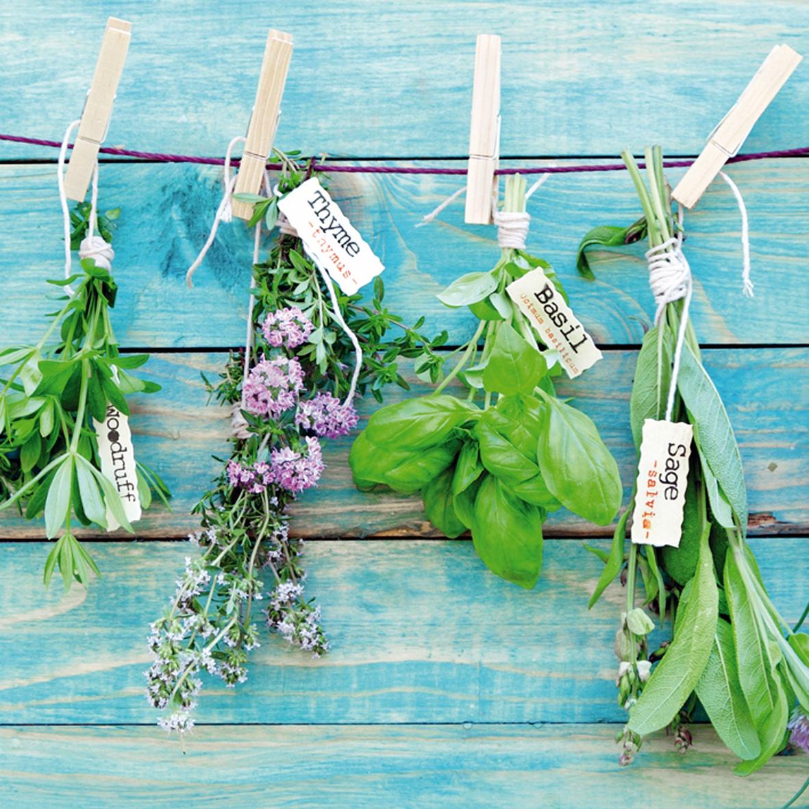 Lunch Servietten Herbs Mix,  Pflanzen - Küchenkräuter,  Everyday,  lunchservietten,  Salbei,  Basilikum,  Thymian