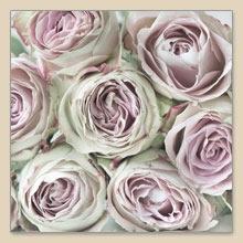 Lunch Servietten Pink Roses,  Blumen - Rosen,  Blumen,  Everyday,  lunchservietten