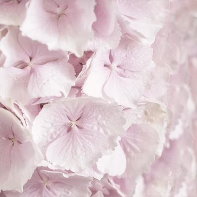 Lunch Servietten ,  Blumen -  Sonstige,  Sommer,  lunchservietten,  Hortensien
