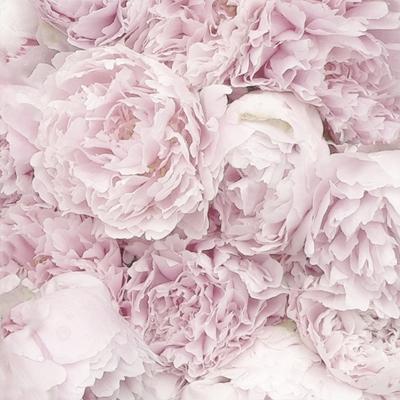 Motivservietten Gesamtübersicht,  Blumen - Rosen,  Sommer,  lunchservietten,  Rosen
