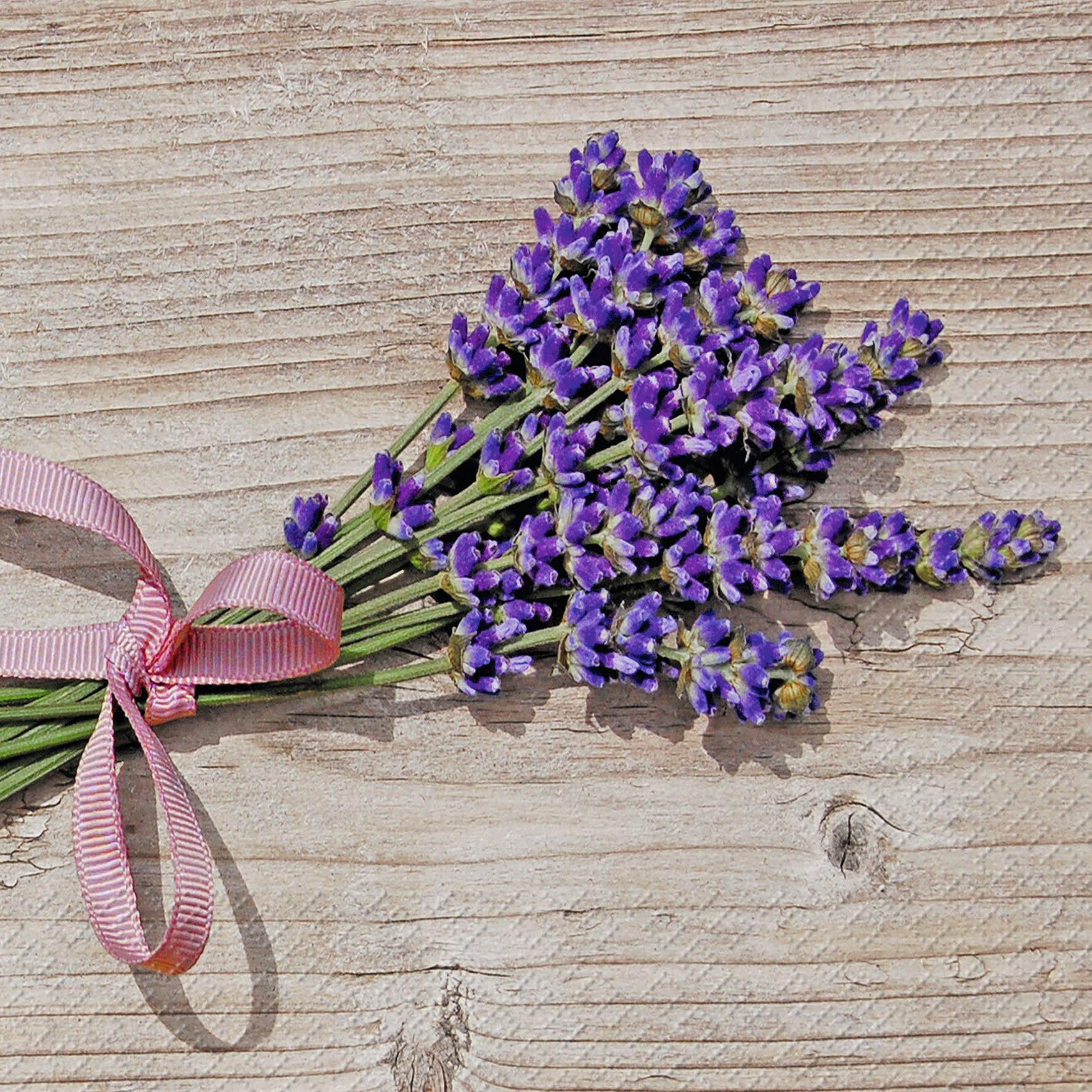 stewo AG,  Blumen - Lavendel,  Everyday,  lunchservietten,  Lavendel