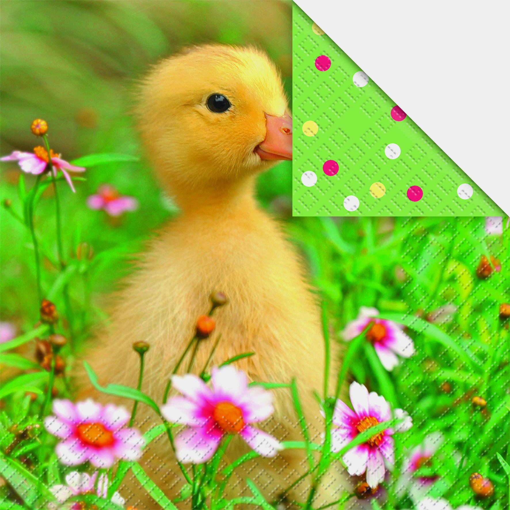 stewo AG,  Blumen -  Sonstige,  Tiere - Kücken,  Regionen - Wald / Wiesen,  Ostern,  lunchservietten,  Küken,  Blumen