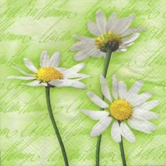 20 Servietten - 25 x 25 cm Blooming Daisies green,  Blumen -  Sonstige,  Blumen - Magariten,  Blumen,  Everyday,  cocktail servietten