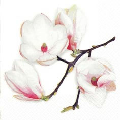 Cocktail Servietten White Magnolia white,  Blumen -  Sonstige,  Früchte -  Sonstige,  Blumen,  Everyday,  cocktail servietten,  Blüten