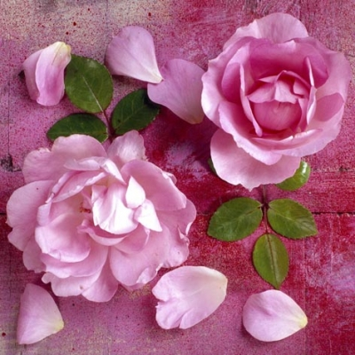 Lunch Servietten Hot Pink Roses