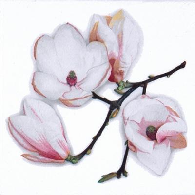 Lunch Servietten White Magnolia white,  Blumen - Magnolien,  Blumen -  Sonstige,  Everyday,  lunchservietten