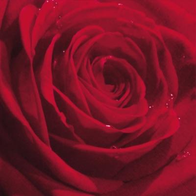Neuheiten ti-flair,  Blumen -  Sonstige,  Blumen - Rosen,  Blumen,  Everyday,  lunchservietten,  Blumen,  Rosen,  rot